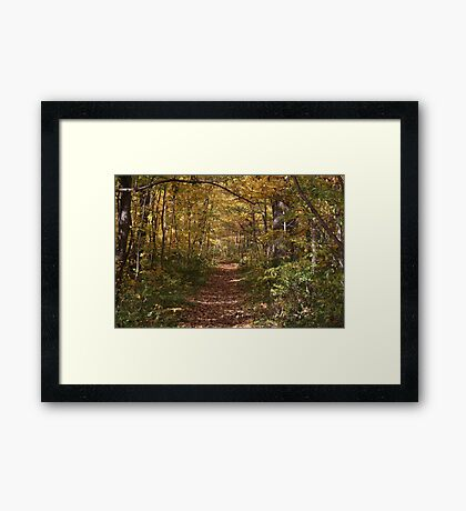 The Shaded Trail Framed Print