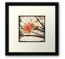 Maple Bokeh Framed Print