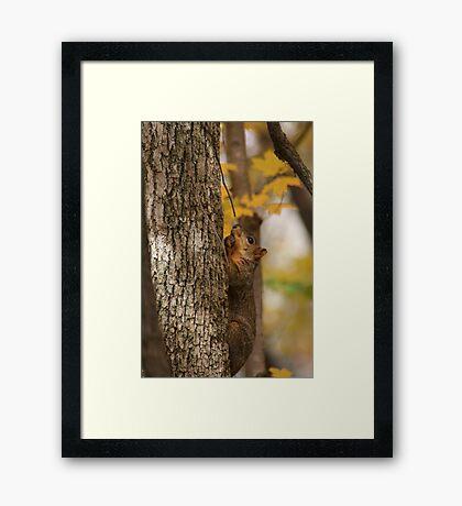 Tree Nuts Framed Print