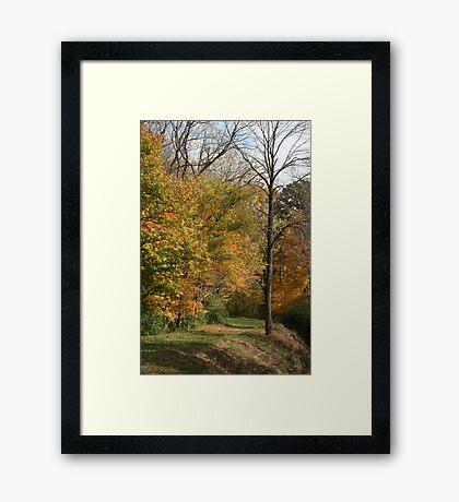 The Dead Tree Framed Print