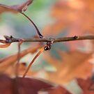 Ladybird on Autumn leaves by LisaRoberts