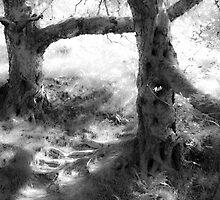 Sylvan Duet Pale BW by brianallanson