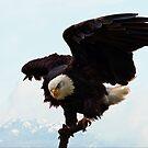 Bald Eagle on a Snag by David Friederich