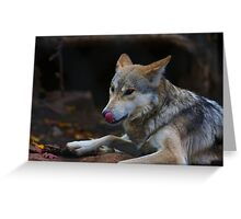 A Hungry Wolf Greeting Card