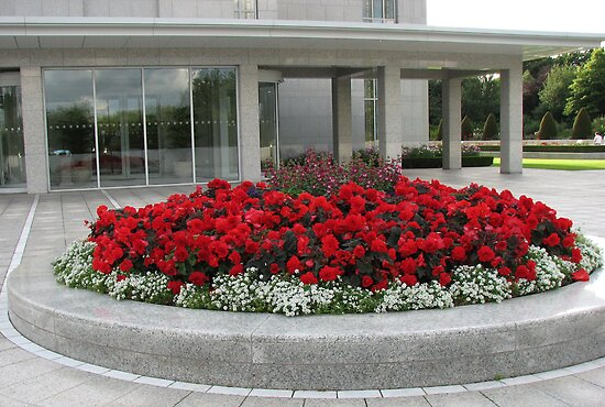 Colour Me Scarlet - Beautiful Begonias and Penstemon by BlueMoonRose