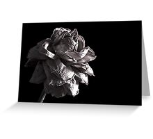 Monochrome Rose Greeting Card