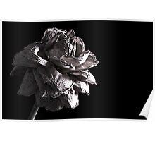 Monochrome Rose Poster