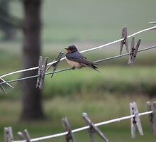 Bird on a Clothesline by Deb Fedeler