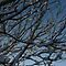 Branches in Snow by TheClarkes