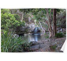 Kondalilla Falls National Park • Queensland • Australia Poster