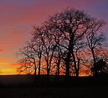 Sunset silhouette by Fiona MacNab
