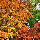 Devon: 'Tree'mendous Colours by Rob Parsons