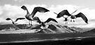 Seagull Flight (Version 3) by Corri Gryting Gutzman