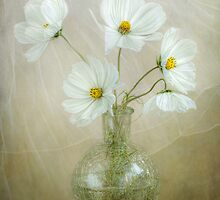 Cosmos breeze by Mandy Disher