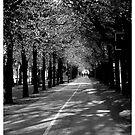 A Walk by Karen Aab
