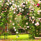 My rose arch proudly showing off the Albertine, Kilmore Vic Aust by Margaret Morgan (Watkins)