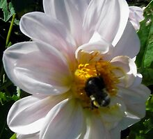 Pollen Perfection by Sandra Gale