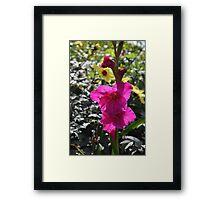 Magenta Gladiolus Flower Framed Print