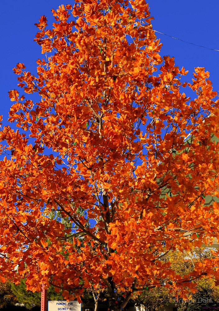 Blue and Orange-  by Brenda Dahl