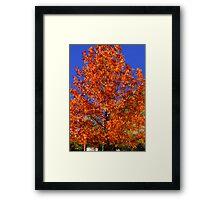 Blue and Orange-  Framed Print