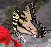 Tiger Swallow tail With Impatiens by Rusty Katchmer