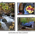 Autumn in the GSMNP by Anthony Pierce