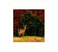 Fall Doe Art Print