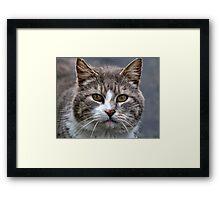 March Cat Framed Print