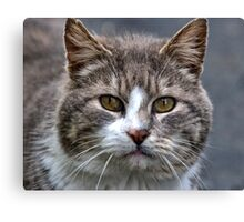 March Cat Canvas Print