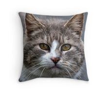 March Cat Throw Pillow