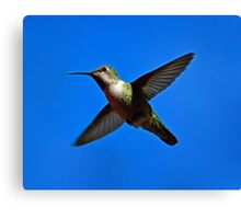 Humming Bird in Flight Canvas Print
