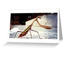 Korean Mantis Greeting Card