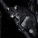 Nighttime Visitor by Josie Eldred