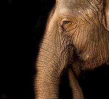 Gentle Giant by Josie Eldred