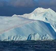 Iceberg & Penguins, Antarctic Sound by Coreena Vieth