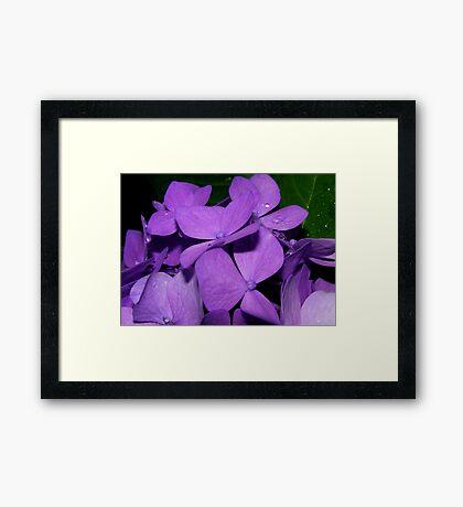 Purple and Raindrops Framed Print