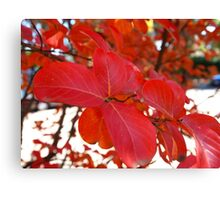 Red Leaves in Autumn 2 Canvas Print