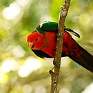 Curious King Parrot V by Josie Eldred