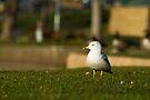 Bird Out of Water by KBritt