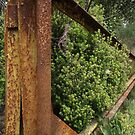 rusted gate in bush by gaylene