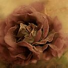 """""""The Warmth of Love ..."""" by Rosehaven"""