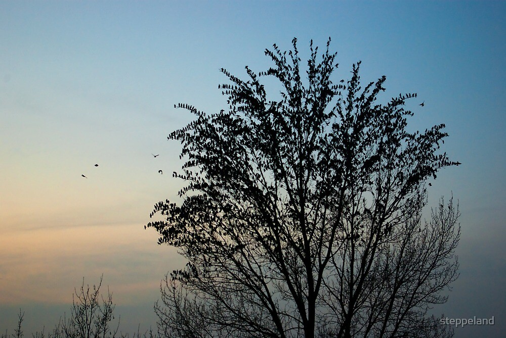 Gathering of starlings by steppeland