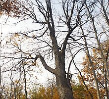 A Tree Without it's Leaves by sternbergimages