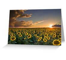 SunFlowers to the Setting Sun Greeting Card