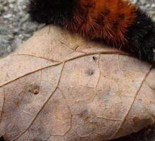October Caterpillar Sticker