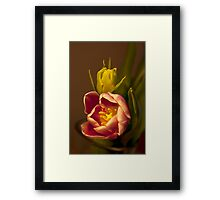 Classical Tulips  Framed Print