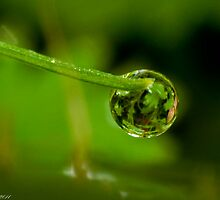 Forest in a raindrop by Darren Clarke