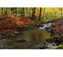 Autumnal Melancholy Photographic Print