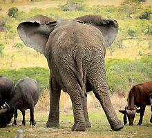 Elephant & Buffalo by ebonyjaynephoto