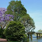 murwillumbah ... by gail woodbury